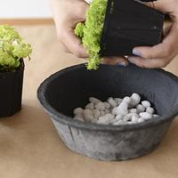 【完全攻略】多肉植物を植え替える方法