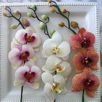 【シーン別】胡蝶蘭を贈る際の相場とマナー