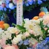 供花にふさわしい胡蝶蘭とは?