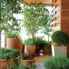 大型観葉植物に陶器製鉢カバーがおすすめ