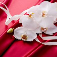 最高級の胡蝶蘭を3万円でギフトに!おすすめ厳選4種のご紹介