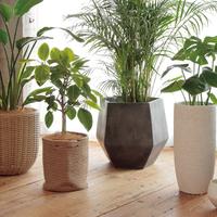 鉢カバー8号用の全貌!サイズ・素材・相場&観葉植物との組み合わせ3選