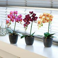種類豊富なミディ胡蝶蘭は通販で