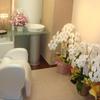 開院祝いの定番!胡蝶蘭の贈り方やマナーとおすすめ3選のご紹介