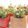人気の観葉植物と長く付き合おう