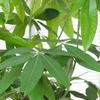 【徹底解説】とっておきの観葉植物を開店祝いに贈るコツ