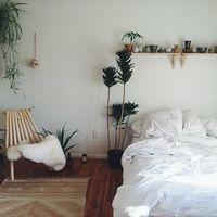 寝室に置く観葉植物の効果とおすすめ3選