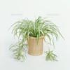 知ってた!?代表的な観葉植物の種類と名前