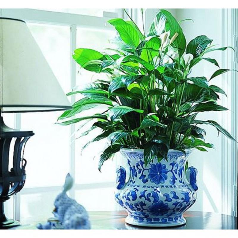 Single foliage plant in decorative container