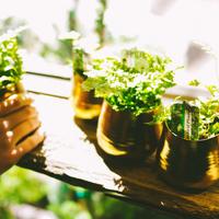 光触媒の観葉植物を取り入れた生活を!