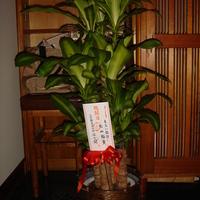 開店祝いにピッタリのオススメ観葉植物