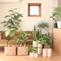 新宿で観葉植物を楽しもう!