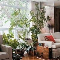新築祝いに観葉植物を贈ろう!