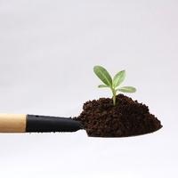土に詳しくなってパキラを上手に育てよう!