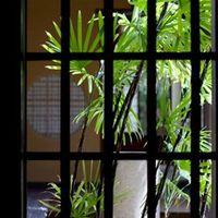 シュロチクの育て方と花言葉や風水効果まで!おすすめ5選もご紹介