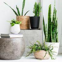 【素材別ご紹介】通販で買える鉢カバー&観葉植物おすすめ3選