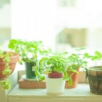 通販で激安の観葉植物を手に入れよう!人気の種類や相場もご紹介