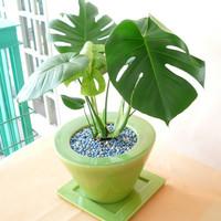 様々な種類が販売されている観葉植物の魅力とは