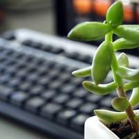 おしゃれな観葉植物は便利なネット通販で!目的別おすすめ15選のご紹介