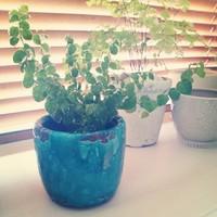 美しく飾れる!観葉植物の陶器鉢カバーの魅力
