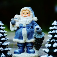 観葉植物もみの木でクリスマスを彩ろう