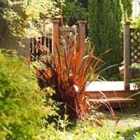 珍しい銅葉も!ニューサイランは丈夫で飾りやすい