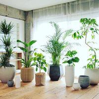 天然素材の鉢カバーTeak Woodで観葉植物を1ランク上のインテリアにしよう!