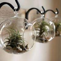 ガラスの鉢でインテリアをおしゃれに!通販おすすめのテラリウム3選