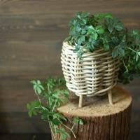 Gray Rattan(グレイラタン)は手編みの自然素材と素敵な色合いが魅力の鉢カバー