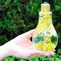 作り方も!ハーバーリウムは花や植物の美しさを長く楽しめる