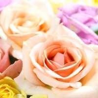 美しき花の女王!バラを通販で楽しむテクニックとは?