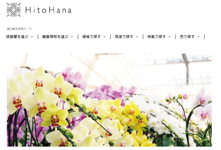 Hitohana3