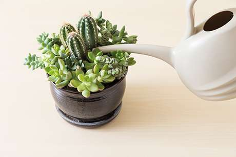 Watering succulents fig02 fkfxal