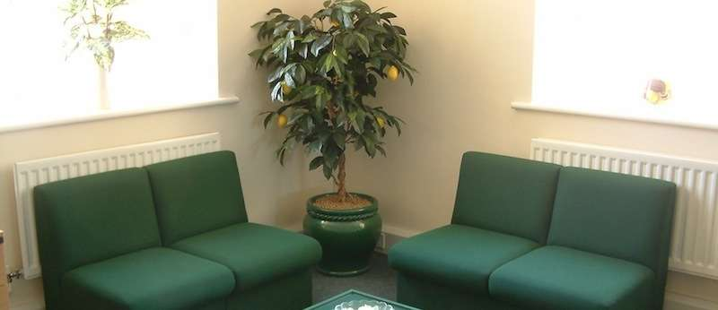 Lemon tree in office