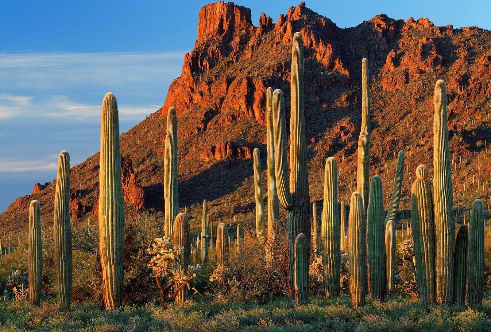 Canyon cactus light blue sky desert nature day daytime brown plant clouds green rocks saguaro photo 1600x1080