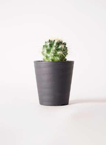サボテン エキノカクタス 金鯱(きんしゃち) 3号 プラスチック鉢