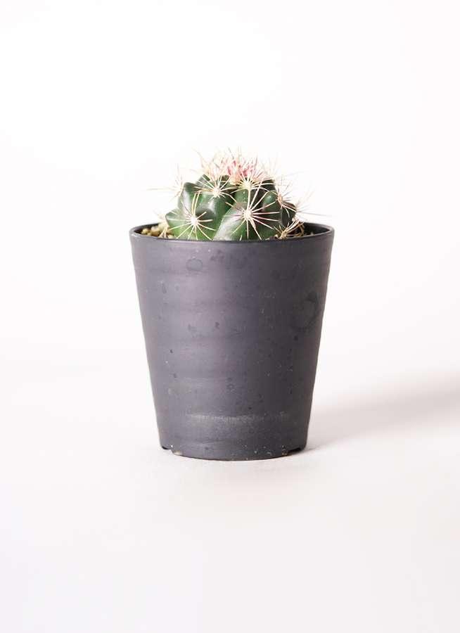 サボテン テロカクタス 和光丸(わこうまる) 3号 プラスチック鉢