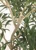 観葉植物 【1都3県 限定配送】 【180cm】【鉢カバー付】ドラセナ アングスティフォリア(リフレクサ) 10号 #22045 4枚目
