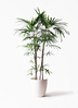 観葉植物 シュロチク(棕櫚竹) 10号 ラスターポット 付き 3枚目