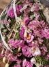 【母の日ギフト】 【季節の花】 スターチス スワッグ(ピンク系) Sサイズ 3枚目