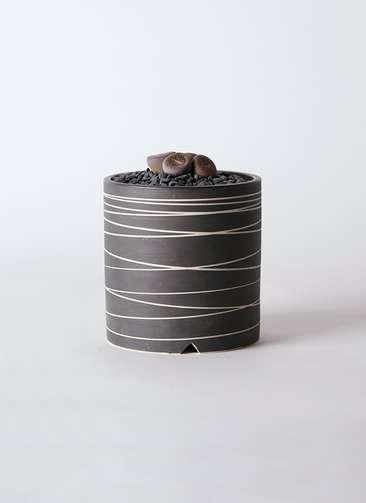 多肉植物 リトープス 紫 3号 Kross 【L size】