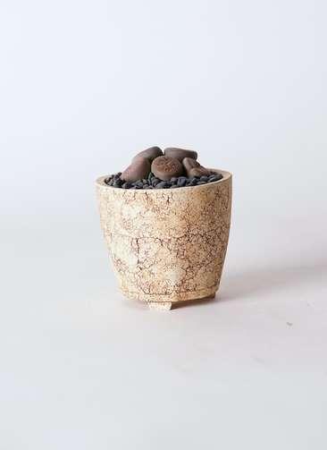 多肉植物 リトープス 紫 3号 Type02 desert #β 【S size】