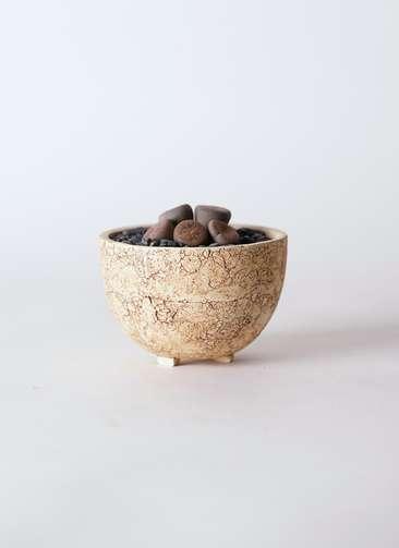 多肉植物 リトープス 紫 3号 Type02 desert #γ 【S size】