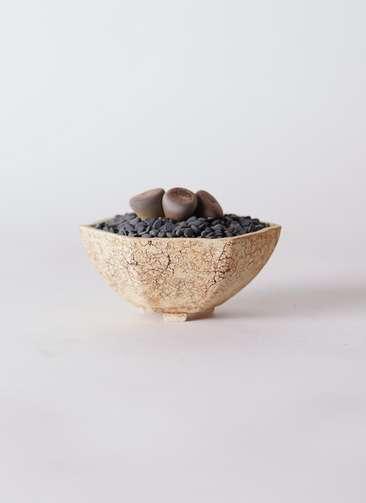 多肉植物 リトープス 紫 3号 Type02 desert #δ 【M size】