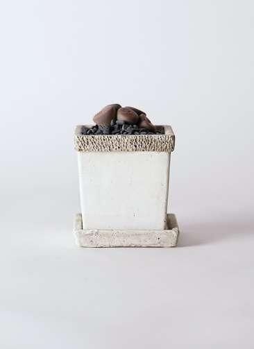 多肉植物 リトープス 紫 3号 リト キューブ3号 受け皿付き