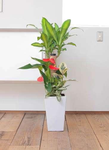 観葉植物 ドラセナ 幸福の木 7号 寄せ植え 角陶器