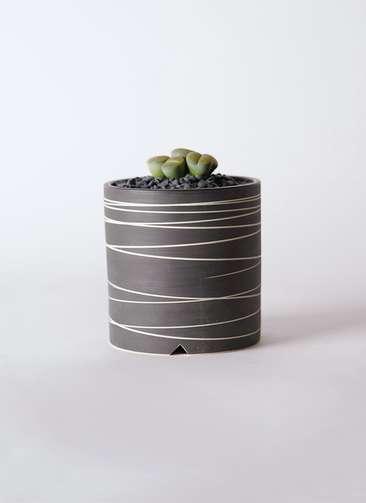 多肉植物 リトープス 緑 3号 Kross 【L size】