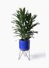観葉植物 ドラセナ グローカル 8号 ビトロ エンデカ ブルー アイアンポットスタンド ブラック 付き