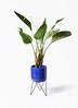観葉植物 オーガスタ 8号 ビトロ エンデカ ブルー アイアンポットスタンド ブラック 付き