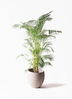 観葉植物 アレカヤシ 10号 エコストーンLight Gray 付き 2枚目